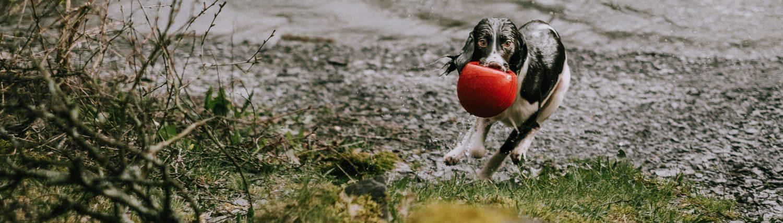 Hundesportgruppe Nürnberg Land e.V.